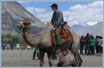 camel safari nubra, travel leh ladakh, ladakh tours, ladakh tourism, leh ladakh tourism, hotels in ladakh, ladakh tour packages